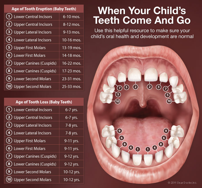 childrens mouth anatomy